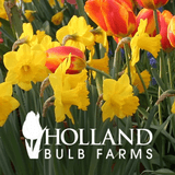 Holland bulb farms coupons best promo codes for october holland bulb farms coupon codes mightylinksfo